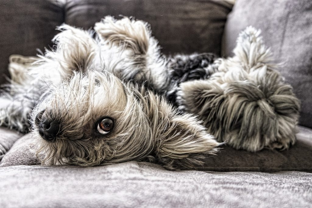 dogs-2597201_1280